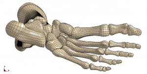 Leg_and_Foot_BonyGeometry_Bottom_wMesh-300x152.png