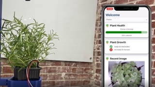 Hand-held mobile app tied to sensor measuring health of potted plant