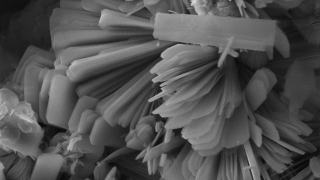 Scanning electron micrograph detail of crystalline calcium silicate hydrates