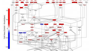 Hypertrophy Network