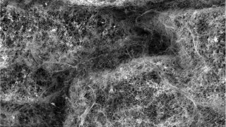 Mucus network, UVA Engineering, cystic fibrosis
